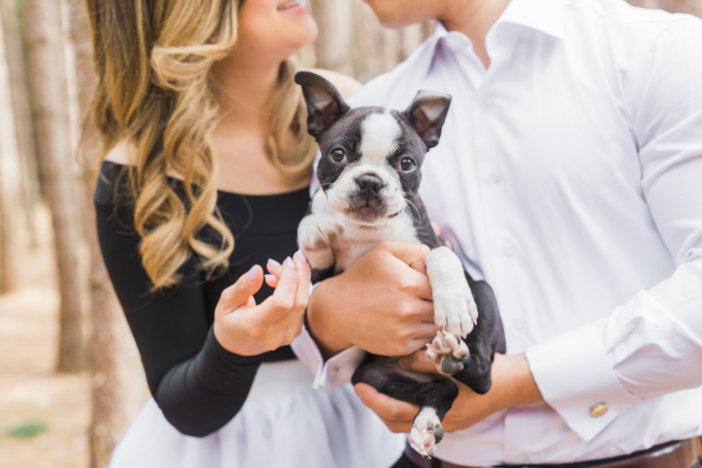 Boston Terrier Puppy Vaughan_Kortright_Conservation_Engagement_Photo