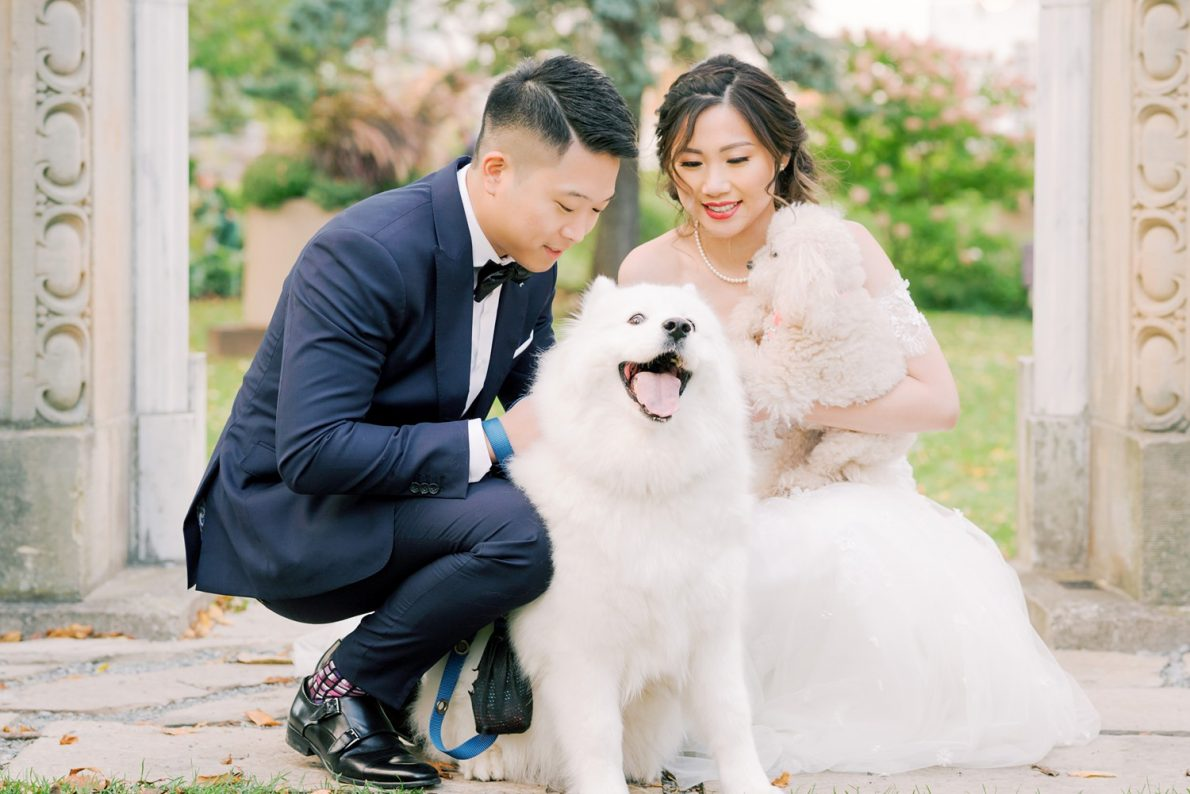 Samoyed Puppy Hong Kong Modern Guild Inn Wedding Photos