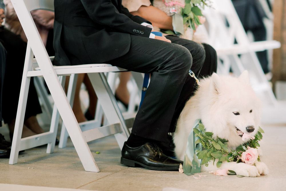 Samoyed-Toronto_Guild_Inn_Wedding_Photos-Rhythm_Photography-563