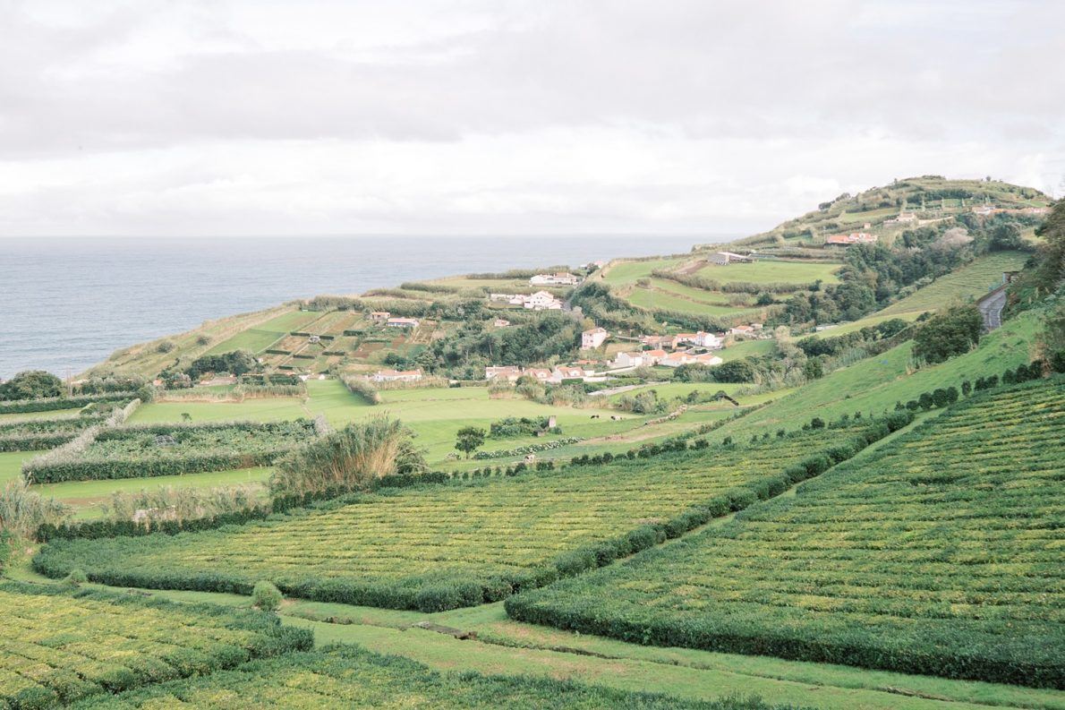 Tea Plantation Sao Miguel Azores Portugal