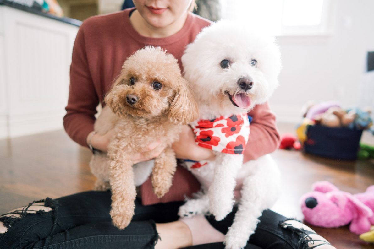 Toy Poodle and Bichon Frise Toronto Dog Birthday Party Toronto Pet Photographer