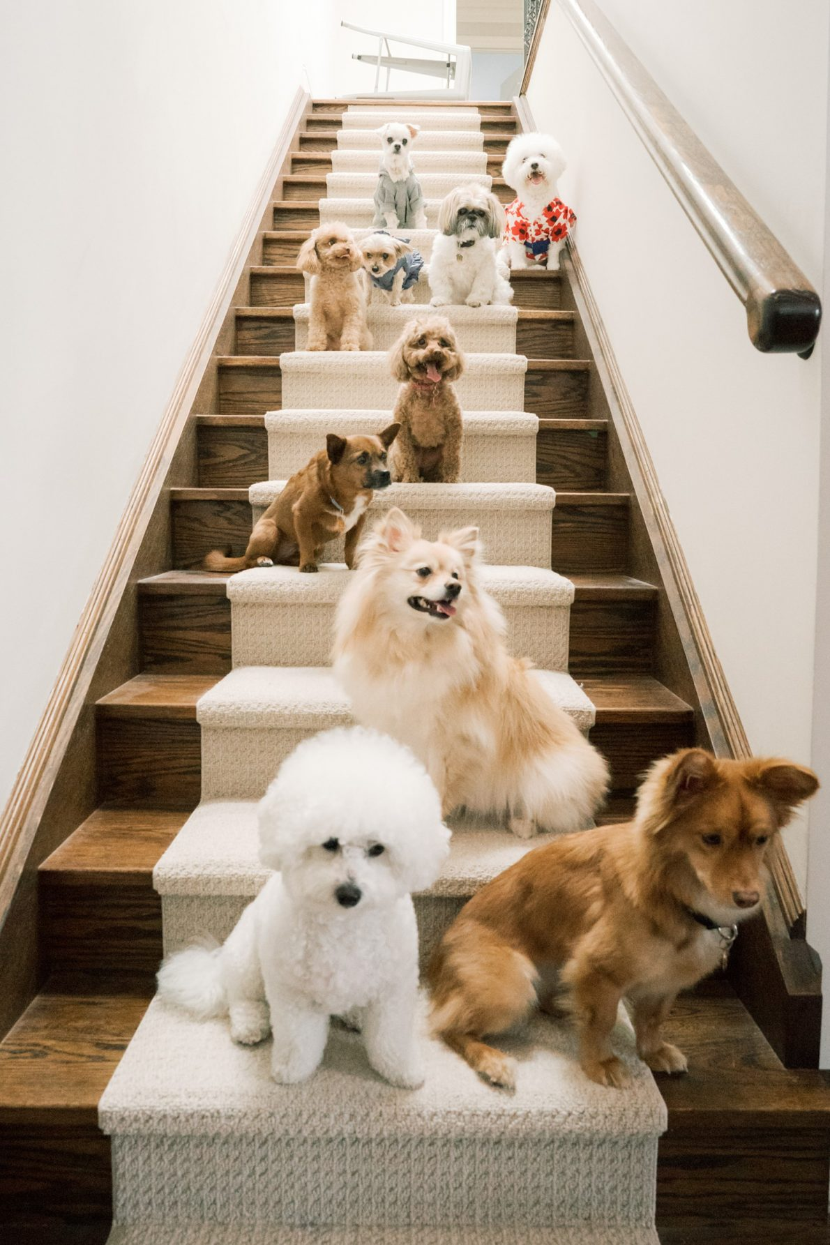 Puppies on stairs at Toronto Dog Birthday Party by Toronto Pet Photographer